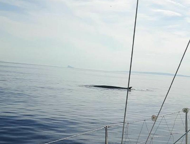 Σύρος: Βρήκαν δίπλα στο σκάφος τους μία φάλαινα! (Photo)
