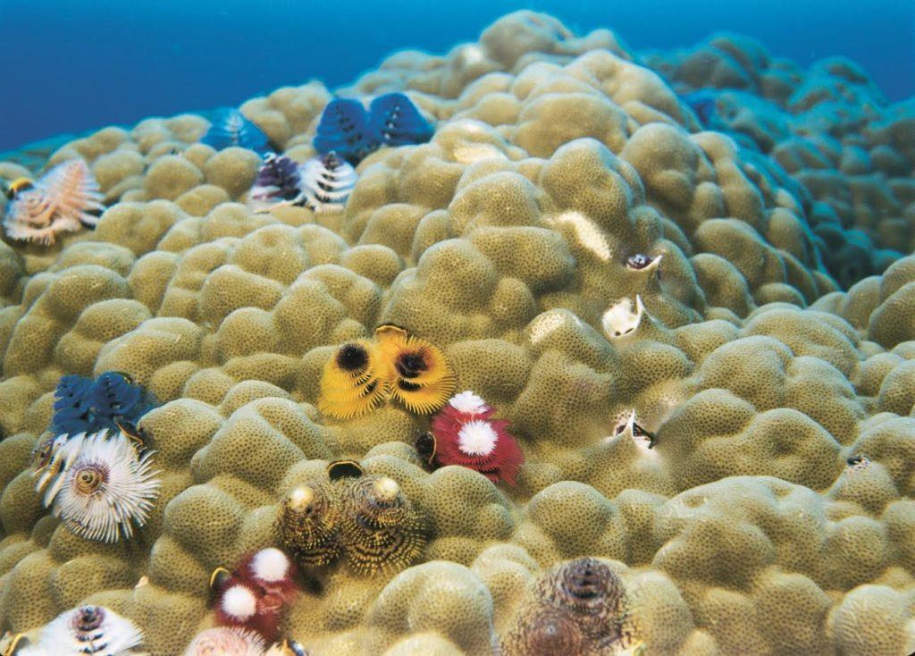 «Κοράλλια και Ύφαλοι» στο Πλανητάριο