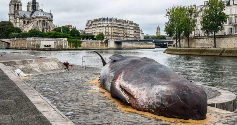 Νεκρή «φάλαινα» στις όχθες του Σηκουάνα