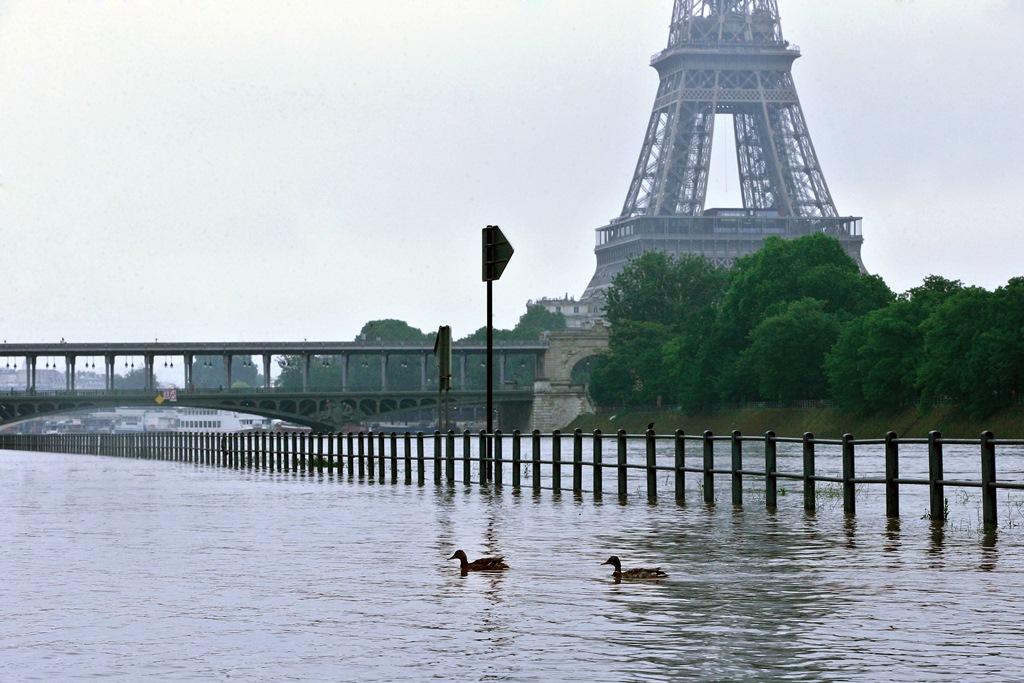 Παρίσι: Οι πάπιες κολυμπούν στα πεζοδρόμια  (Εντυπωσιακές εικόνες)