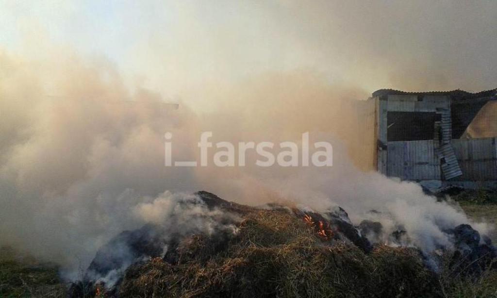 Φωτιά σε μαντρί στα Φάρσαλα – Κάηκαν ζωντανά περισσότερα από 200 ζώα