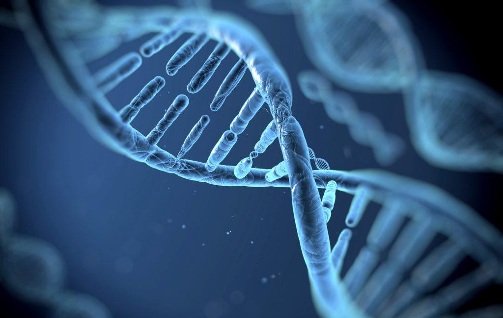Πάνω από 500 γονίδια συνδέονται με τη νοημοσύνη