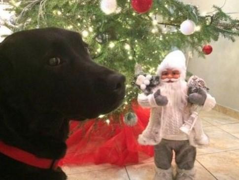 Απίστευτο: Σκότωσαν με φόλα σκύλο-οδηγο τυφλών (Video)