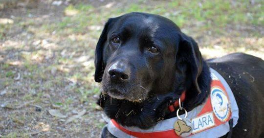 Πέθανε η Λάρα, ο πρώτος σκύλος οδηγός τυφλών