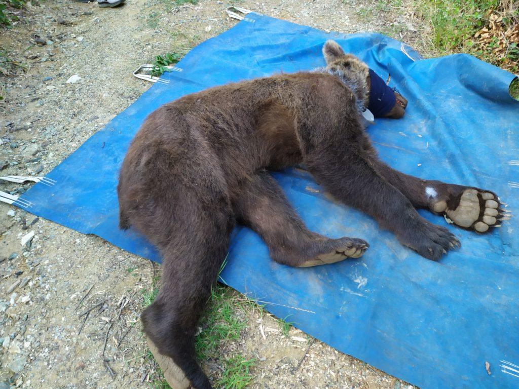 Ο «Αρκτούρος» έσωσε τον Ερμή από παράνομη παγίδα για αρκούδες (Photos)