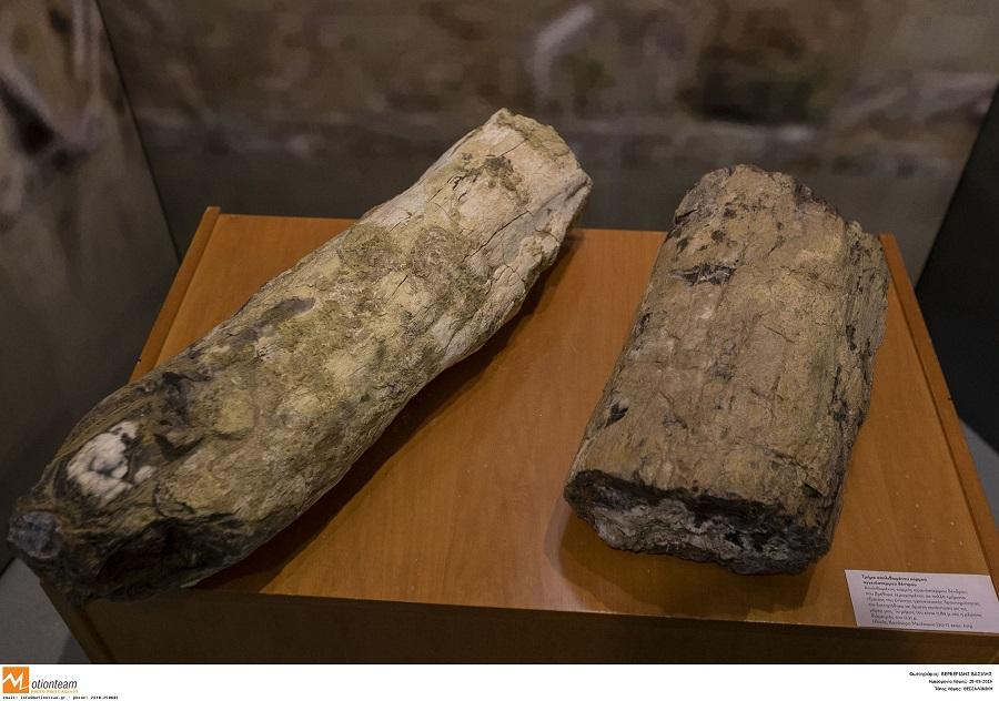 Σημαντική ανακάλυψη στη Λέσβο: Αποκαλύφθηκαν δύο γιγάντιοι κορμοί απολιθωμένων δένδρων