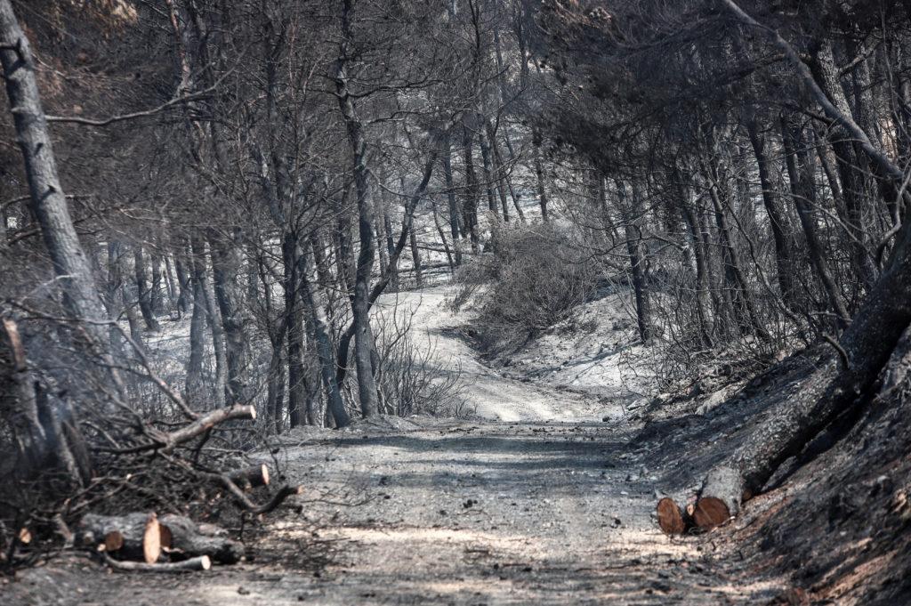 Απαιτούνται άμεσα μέτρα σε Εύβοια και Ελαφόνησο μετά την τεράστια οικολογική και οικονομική καταστροφή