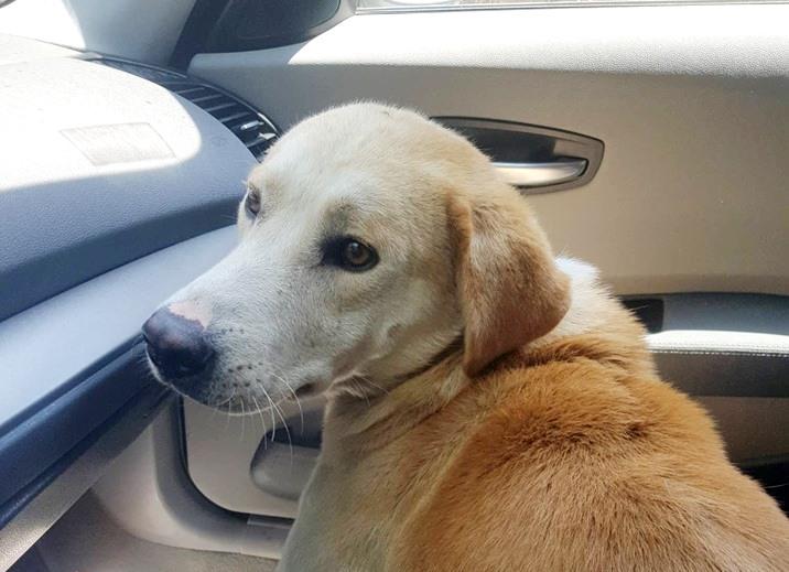 Κρήτη: Καλά στην υγεία του ο σκύλος που τον έσερνε ηλικιωμένος δεμένο στο αυτοκίνητό του (Video & Photos)
