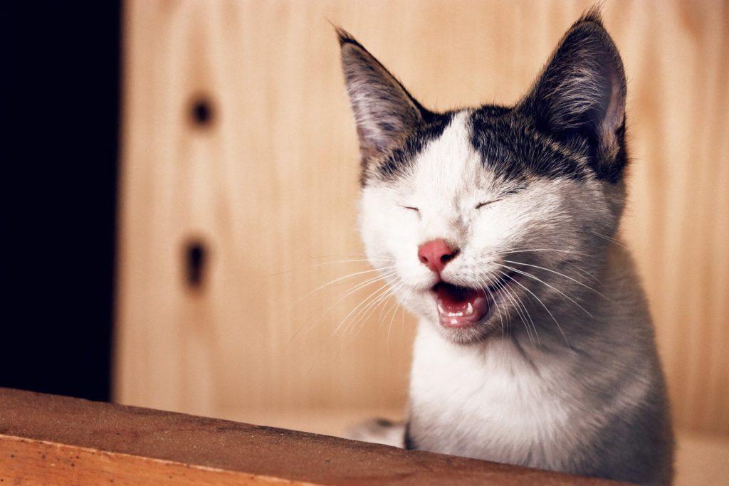 Η γάτα που λατρεύει το μασάζ (Video)