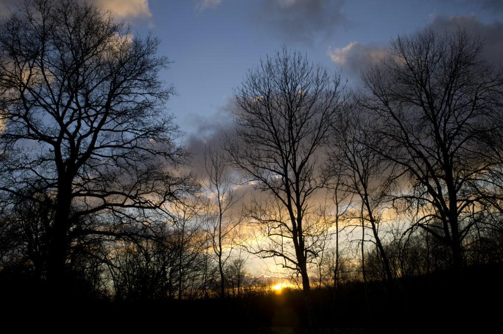 Το 40% των ειδών δένδρων στην Ευρώπη απειλούνται με εξαφάνιση