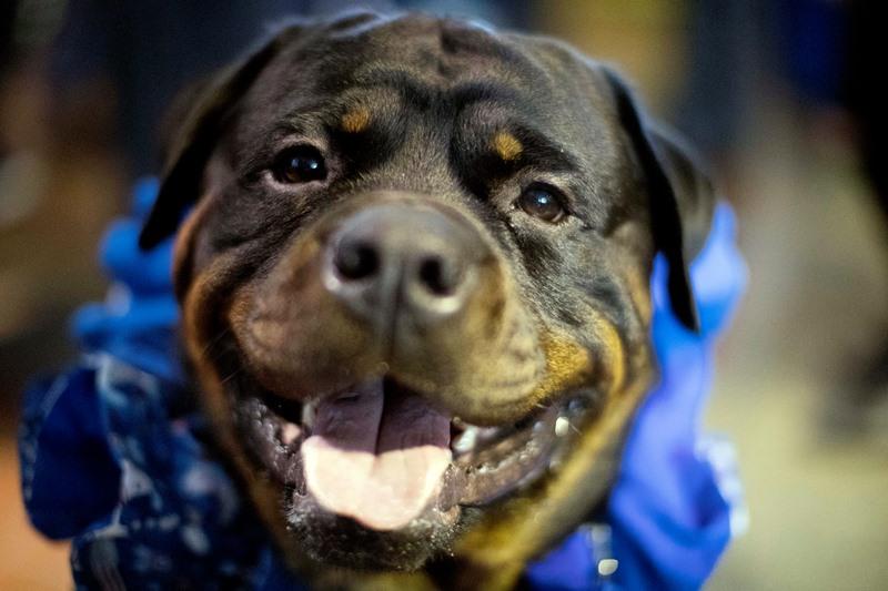 Σκύλος τραυμάτισε κοριτσάκι δύο χρόνων, στην Πέλλα