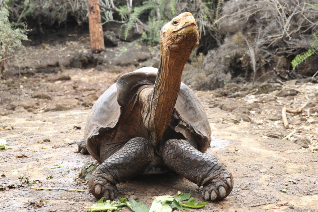 Ντιέγκο: Η… σεξομανής χελώνα που έσωσε το είδος της (Photos)