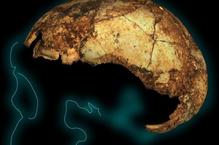 Νότια Αφρική: Ανακαλύφθηκε το αρχαιότερο στον κόσμο κρανίο «Όρθιου Ανθρώπου» (Homo erectus), δύο εκατομμυρίων ετών