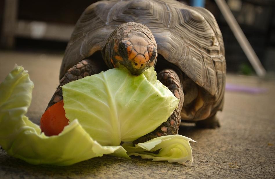 Ιταλία: Πρόστιμο 400 ευρώ σε γυναίκα γιατί… έβγαλε βόλτα τη χελώνα της