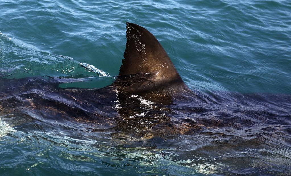 Πολάκης: Ο καρχαρίας και ο Φρέντυ Κρούγκερ!