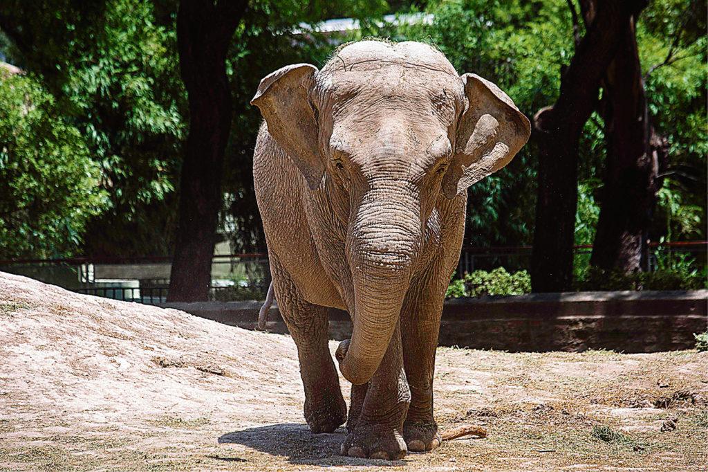 Ο Κυριάκος και ο ελέφαντας