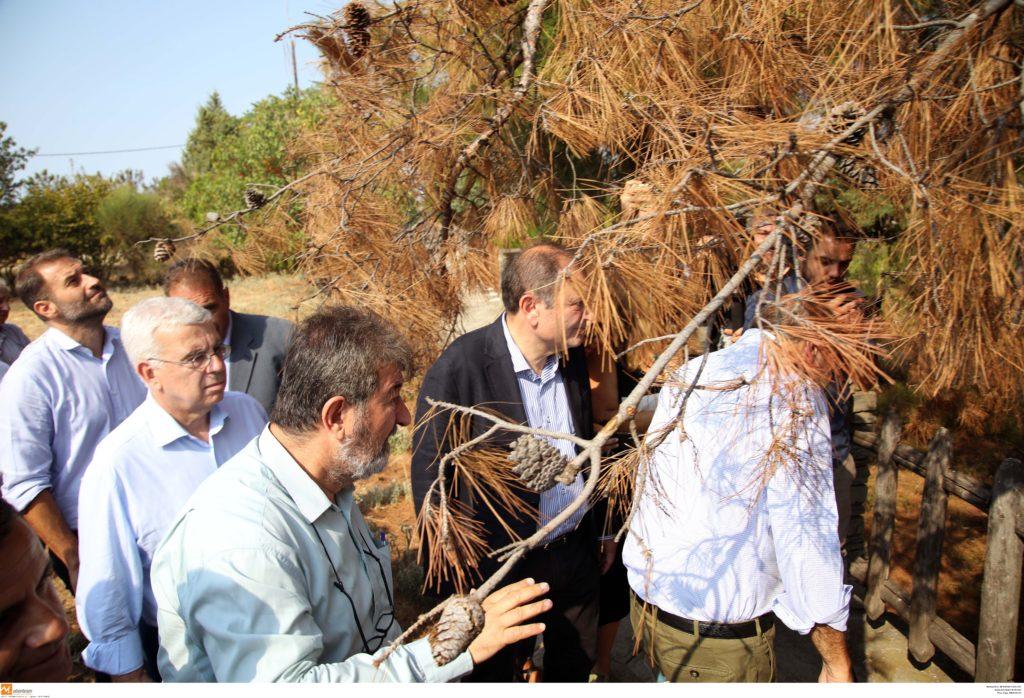 «Πανδημία» στο Σέιχ Σου: Φλοιοφάγο σκαθάρι αποδεκατίζει το δάσος της Θεσσαλονίκης