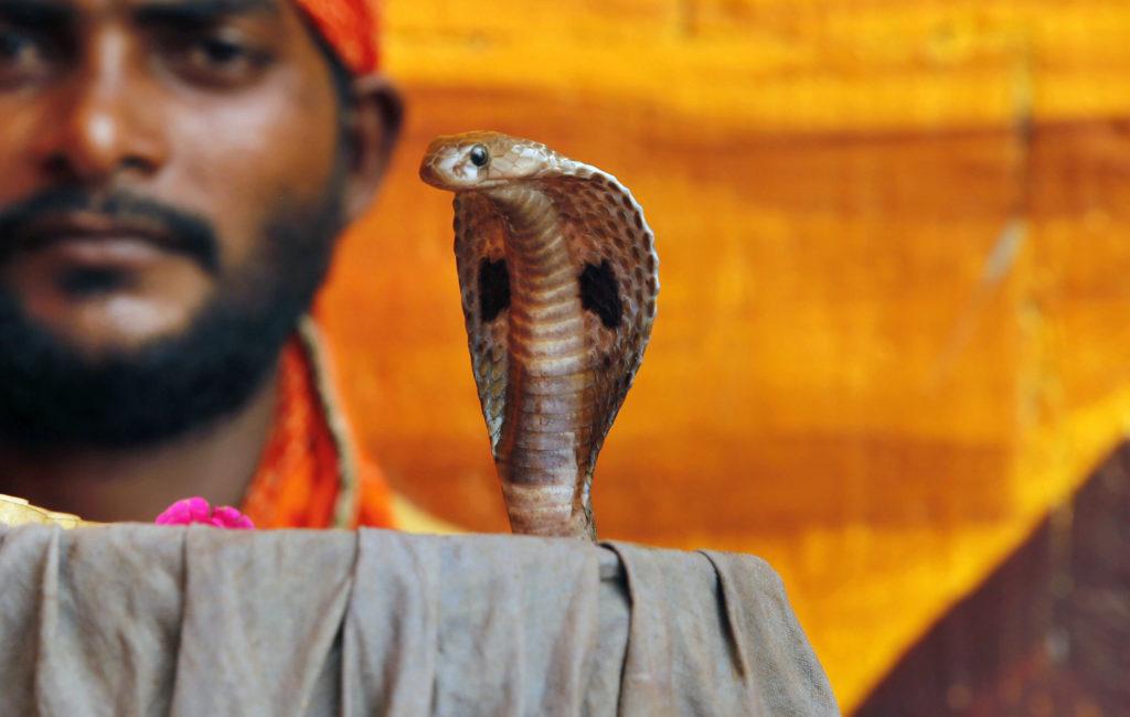 Ινδός κατηγορείται ότι χρησιμοποίησε δύο φίδια για να σκοτώσει τη σύζυγό του