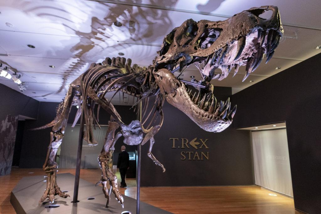 ΗΠΑ: Σε δημοπρασία σκελετός T-rex, ηλικίας 67 εκατομμυρίων ετών από τον οίκο Christie's