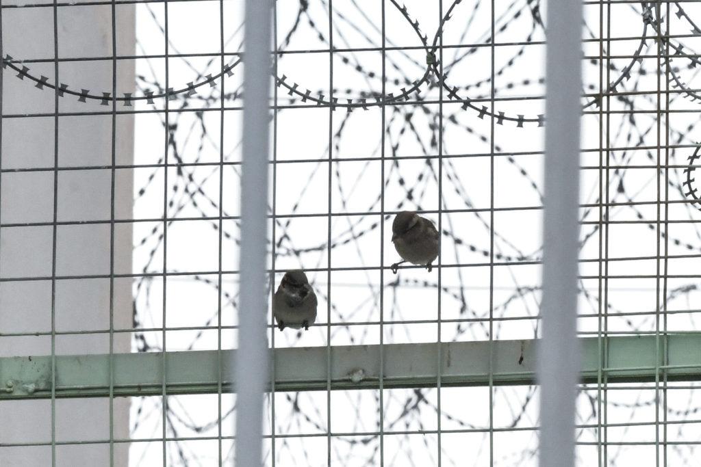 Καταγγελία κρατουμένων φυλακών Διαβατών: Μας έχουν κλειδωμένους στους θαλάμους μαζί με όσους έχουν διαγνωστεί θετικοί στον κορονοϊό