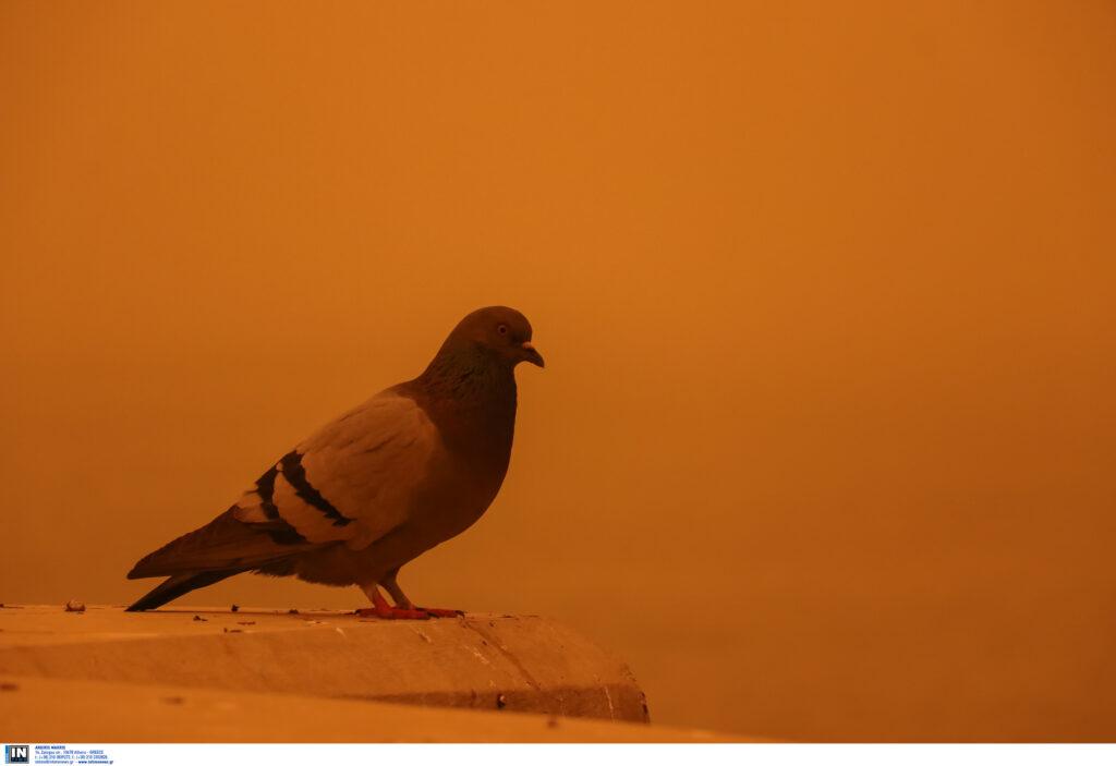 Κρήτη: Στο έλεος της αφρικανικής σκόνη – Έρχεται και στην Αθήνα το Σαββατοκύριακο (Video)