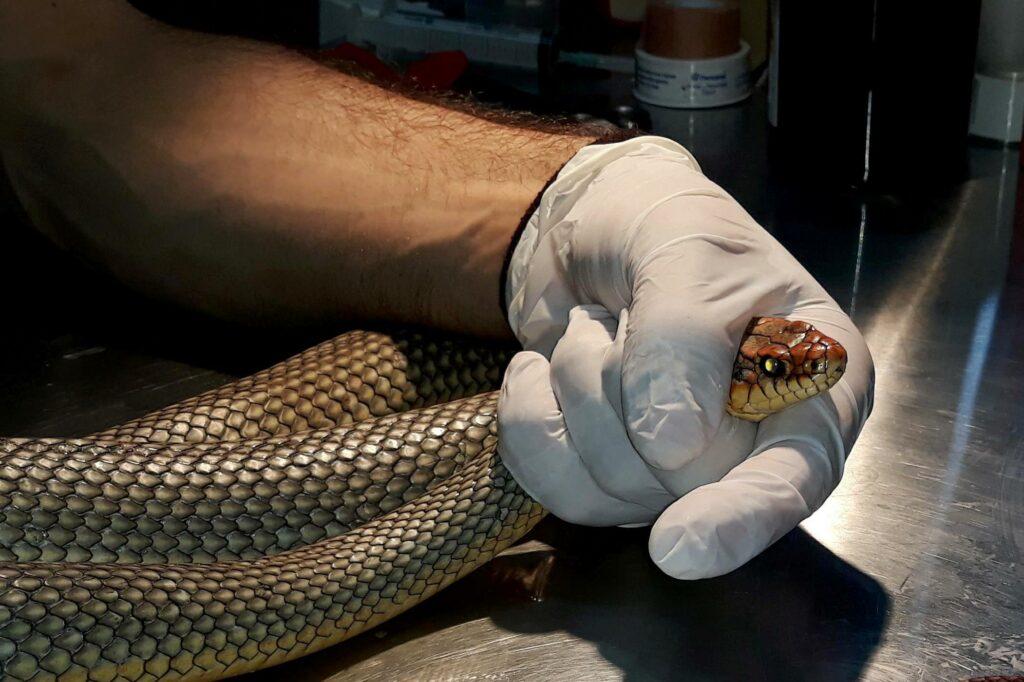 Θεσσαλονίκη: Φίδι σε σούπερ μάρκετ προκαλεί πανικό! (Photo)