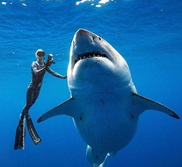 Χαβάη: Εικόνες που κόβουν την ανάσα – Δύτρια κολυμπάει δίπλα σε λευκό καρχαρία-τέρας! (Video & Photos)