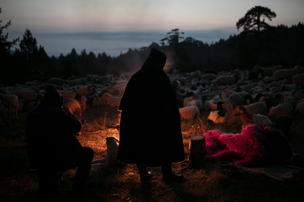 Οι νομάδες που στα όνειρά τους βλέπουν πρόβατα- Ο Δημήτρης Τοσίδης μιλάει στο Docville