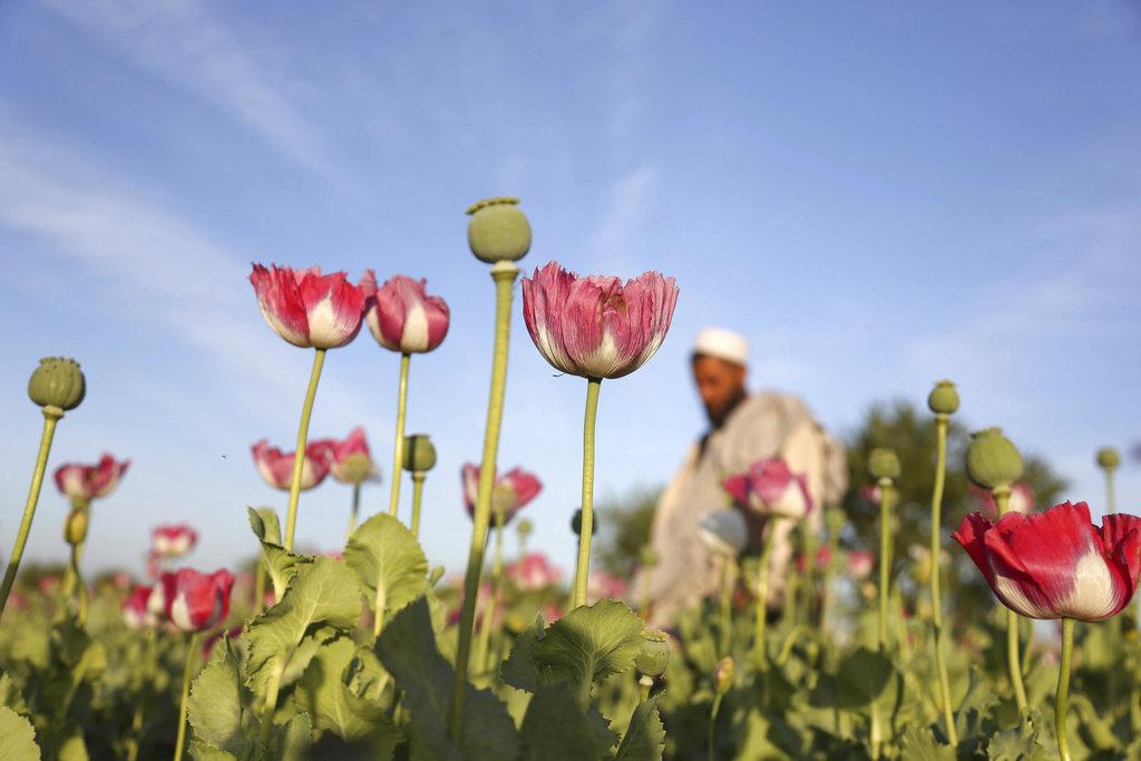 OHE: Η πανδημία αύξησε την κατανάλωση ναρκωτικών