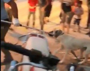 Έτσι περισυλλέγουν τα αδέσποτα στην Τουρκία (Video)