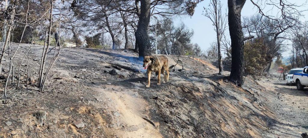 Κρανίου τόπος η Βαρυμπόμπη – Συγκλονιστικές φωτογραφίες απόλυτης καταστροφής
