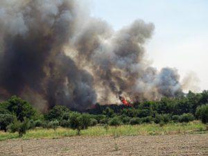 Συνεχίζεται η μάχη με τις φλόγες σε Φθιώτιδα και Ρόδο – Ισχυρές πυροσβεστικές δυνάμεις και στη Μεσσηνία