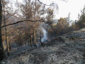 Μετράει τις πληγές της η Ρόδος – Σε ύφεση η πυρκαγιά