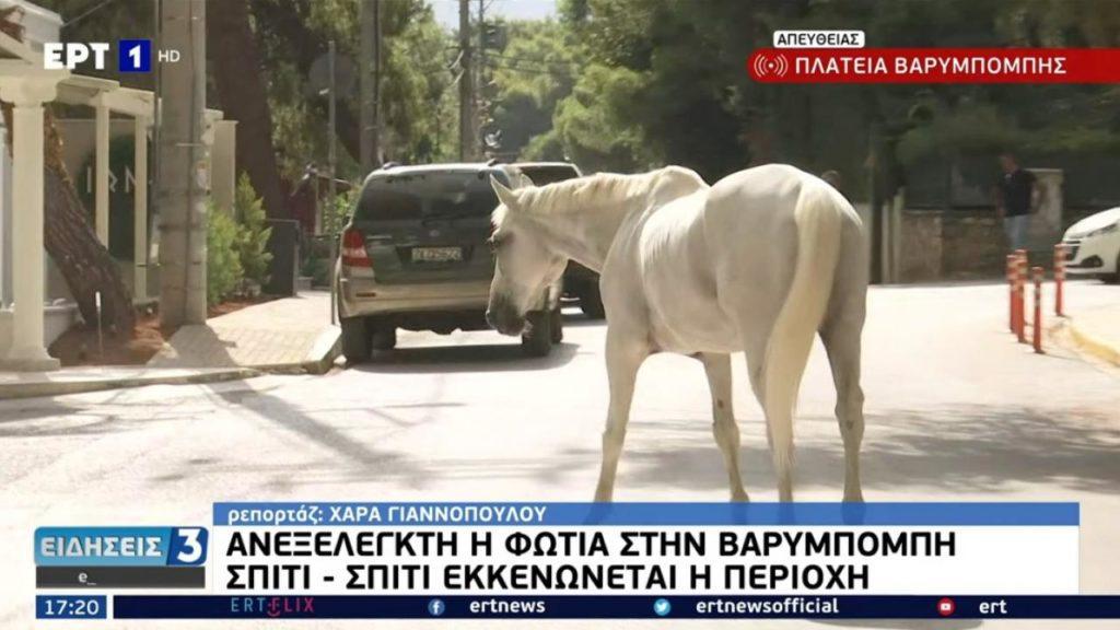 Άλογα στα στενά της Βαρυμπόμπης προσπαθούν να ξεφύγουν από τη φωτιά