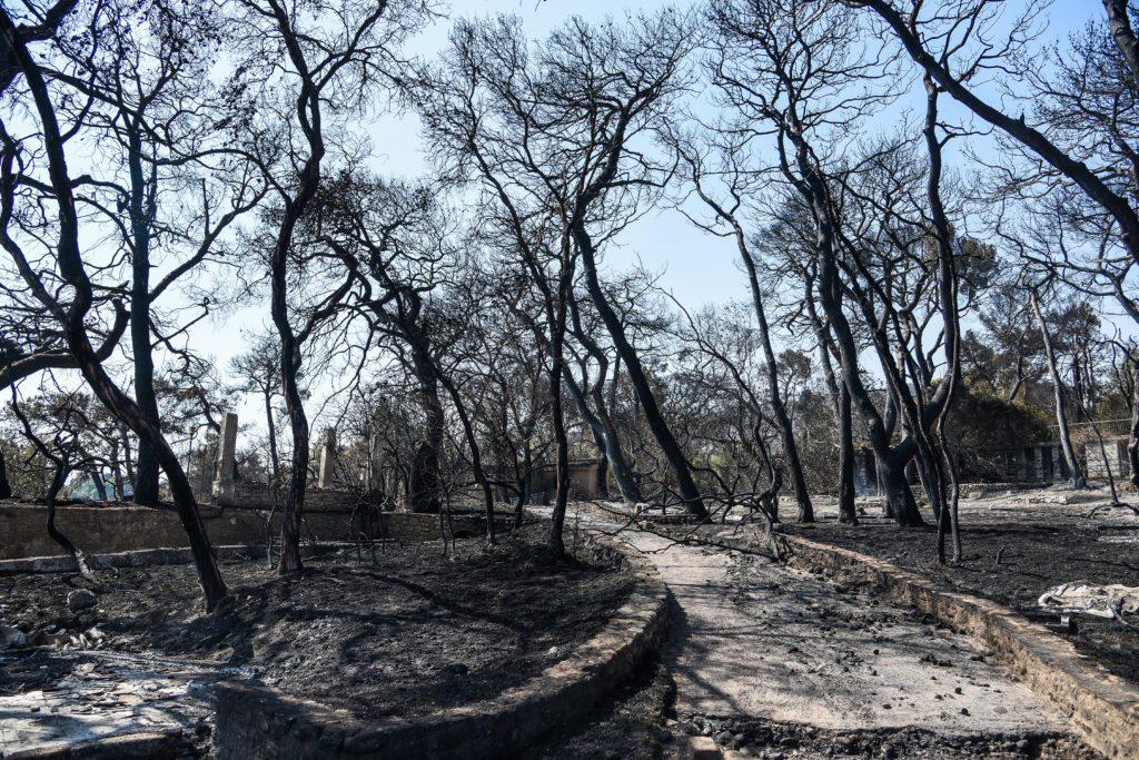 Πυρκαγιά στην Αχαΐα: Τεράστια καταστροφή – Πάνω από 3.000 στρέμματα έγιναν στάχτη