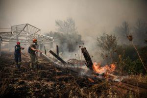 Βαρυμπόμπη: Στο Ολυμπιακό Κέντρο Ιππασίας περίπου 200 άλογα που κινδύνευσαν από τη φωτιά