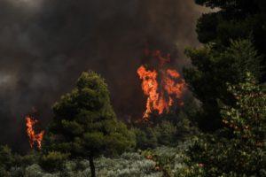 Πυρκαγιά στη Φωκίδα: Εντολή εκκένωσης των χωριών Ελαία και Καλλιθέα – Κάηκαν σπίτια