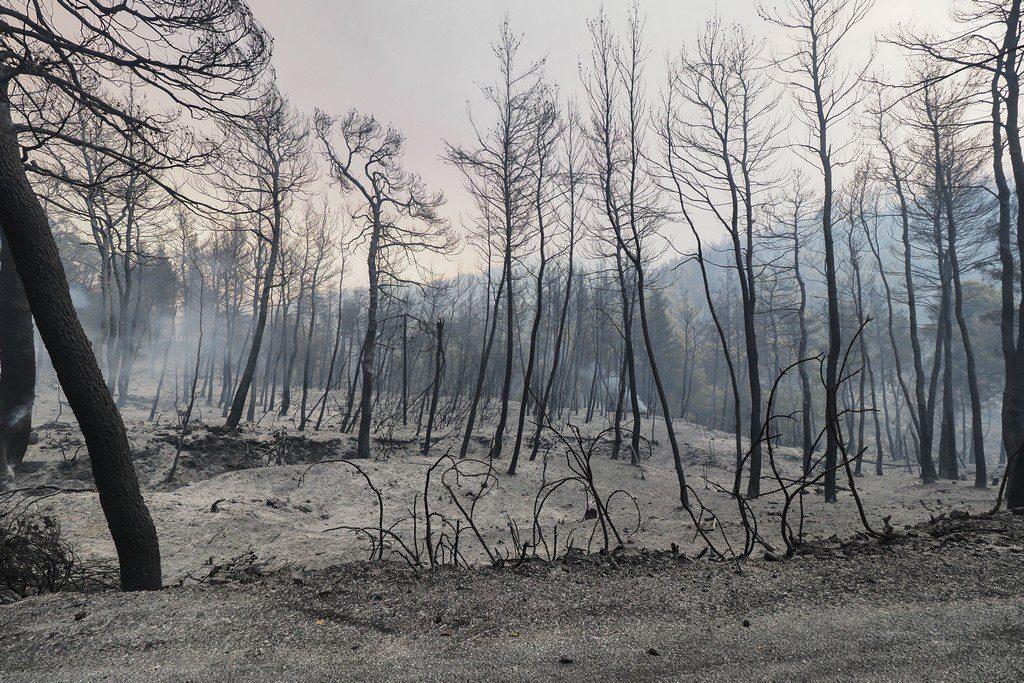 Αστεροσκοπείο: Τουλάχιστον 60.000 στρέμματα κάηκαν το πρώτο τετραήμερο του Αυγούστου