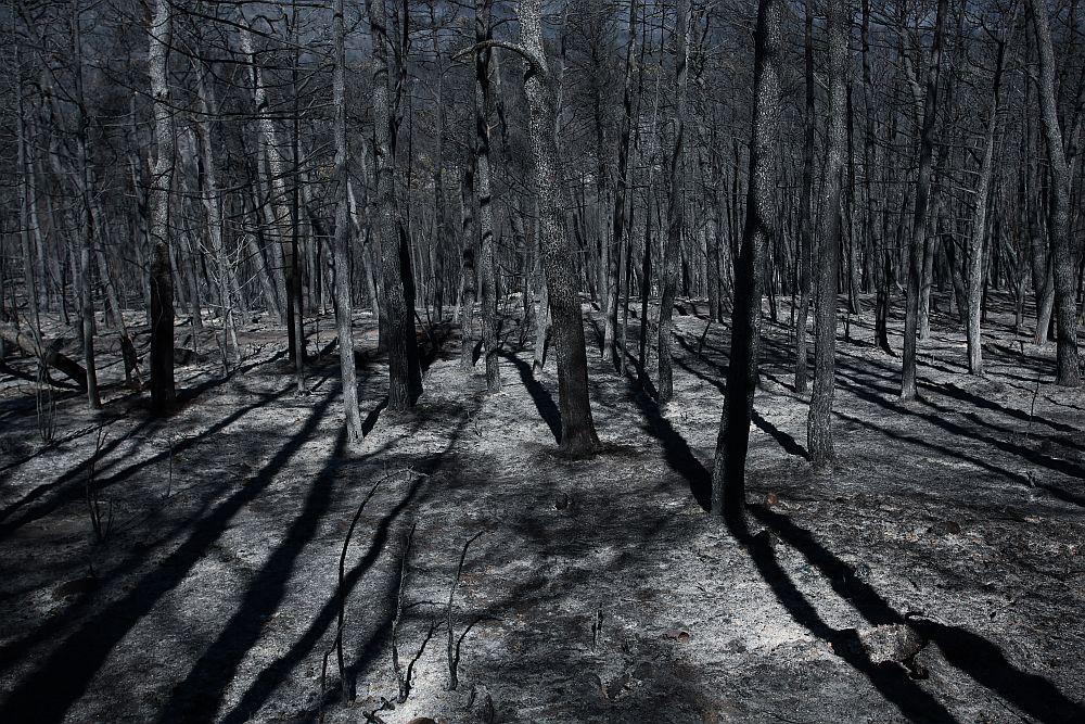 Φωτιές: Στάχτη περισσότερα από 650.000 στρέμματα σε Εύβοια, Αττική και Λακωνία