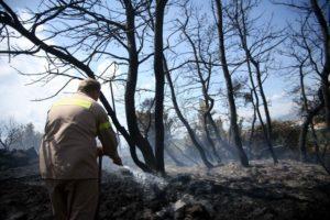 Πυρκαγιά σε πευκοδάσος στο Κιλκίς