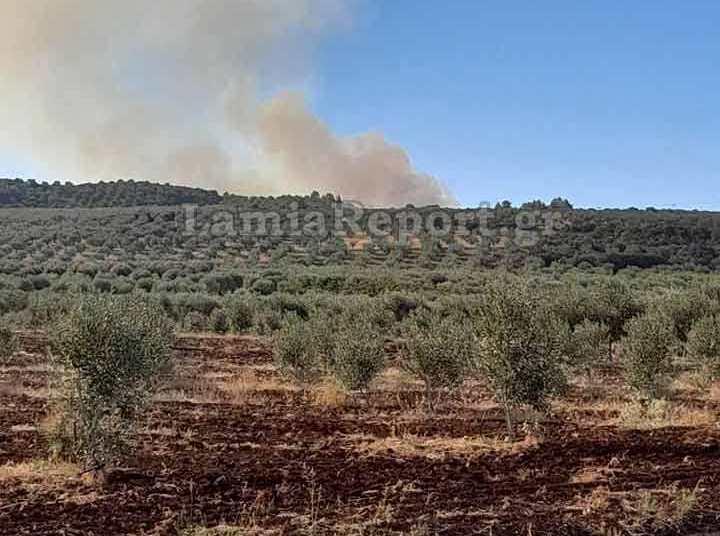 Λαμία: Σε εξέλιξη η πυρκαγιά έξω από την Αταλάντη