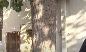 Ξυλοφάγο έντομο απειλεί τις μουριές στην Αθήνα (Video)