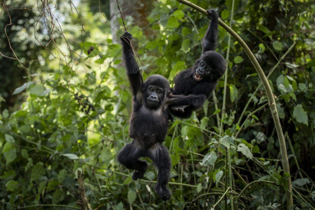 Σχεδόν το 30% των ειδών που μελετήθηκαν απειλούνται με εξαφάνιση