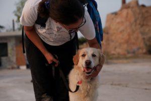 Μυτιλήνη: Άνδρας γρονθοκόπησε πρώτα τον σκύλο του και μετά 15χρονο που έσπευσε να τον βοηθήσει