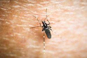 Απειλεί την Ελλάδα ο «αποικισμός» του κορεάτικου κουνουπιού; – Ποίες οι ομοιότητες με το κουνούπι τίγρης