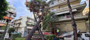 Θεσσαλονίκη: Δέντρο καταπλάκωσε πολυκατοικία στην Καλαμαριά – δεν υπήρξε τραυματισμός